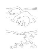 Piuma il piccolo orsetto polare da colorare 107