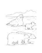 Piuma il piccolo orsetto polare da colorare 114