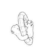 Piuma il piccolo orsetto polare da colorare 115