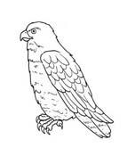 Uccello da colorare 205