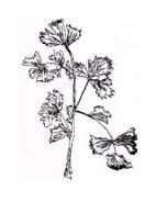Verdura da colorare 61