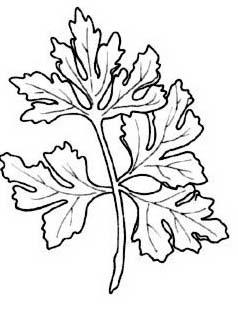 Verdura da colorare 62