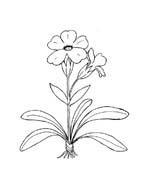 Fiore da colorare 346