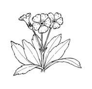 Fiore da colorare 347