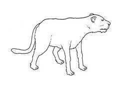 Tigre da colorare 53