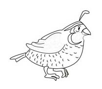 Uccello da colorare 208