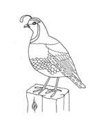 Uccello da colorare 209