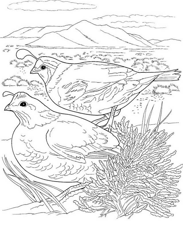 Uccello da colorare 211