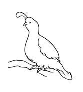 Uccello da colorare 212