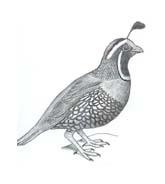Uccello da colorare 214