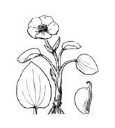 Fiore da colorare 349