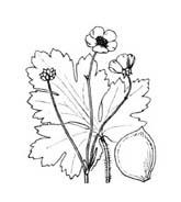 Fiore da colorare 350