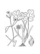 Fiore da colorare 353