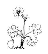 Fiore da colorare 354