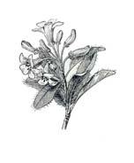 Arbusto da colorare 39