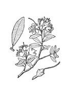 Arbusto da colorare 40