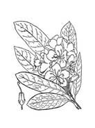 Arbusto da colorare 41
