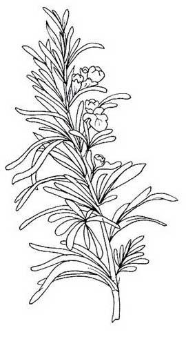 Verdura da colorare 67