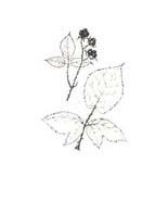 Arbusto da colorare 44