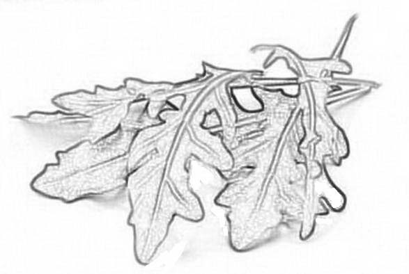 Verdura da colorare 68