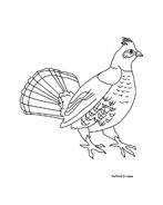 Uccello da colorare 218