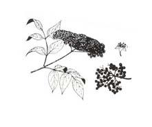 Arbusto da colorare 51