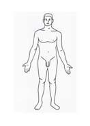 Corpo umano da colorare 90