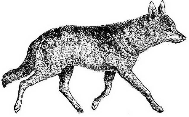 Animale da colorare 179