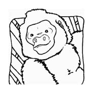 Scimmia da colorare 26