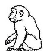 Scimmia da colorare 38