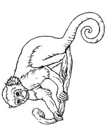 Scimmia da colorare 41