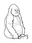 Scimmia da colorare 42