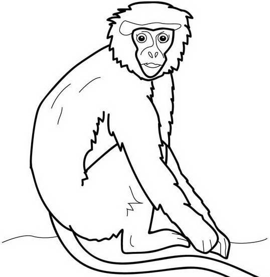 Scimmia da colorare 43