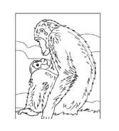 Scimmia da colorare 44