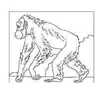 Scimmia da colorare 48