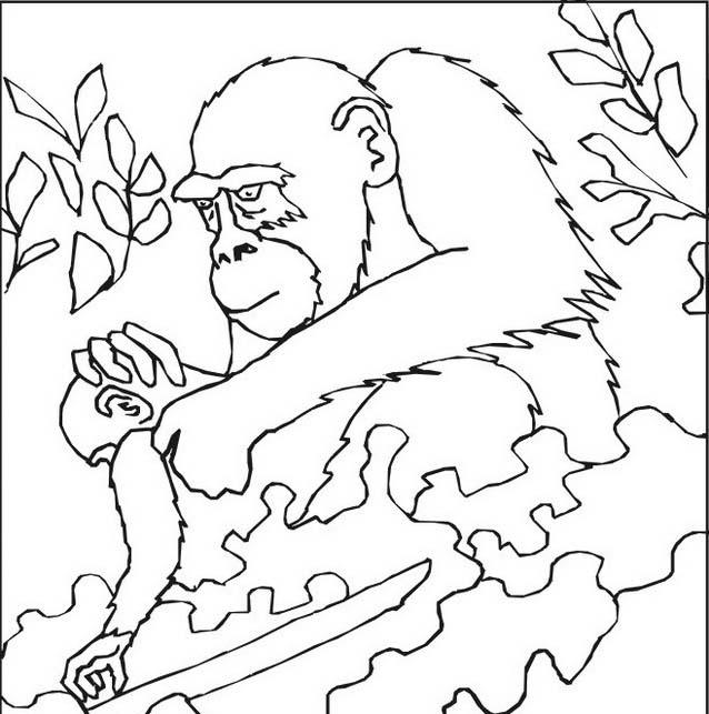 Scimmia da colorare 49