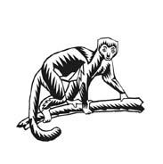 Scimmia da colorare 53