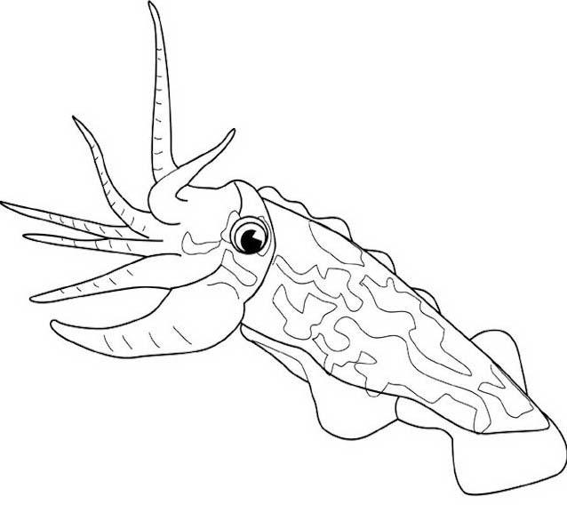 Pesce da colorare 237
