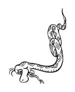 Serpente da colorare 59