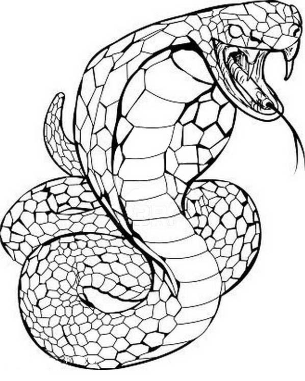 Serpente da colorare 79