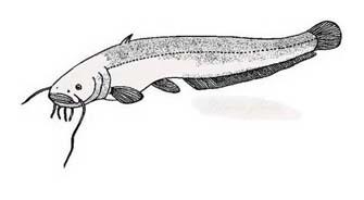 Pesce da colorare 238