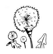 Fiore da colorare 355