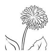 Fiore da colorare 358