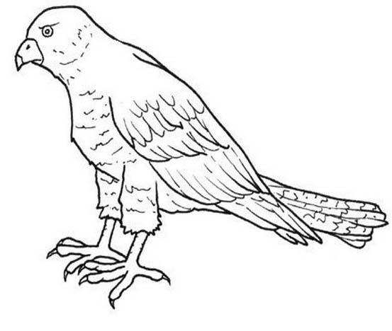 Uccello da colorare 220