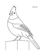 Uccello da colorare 221
