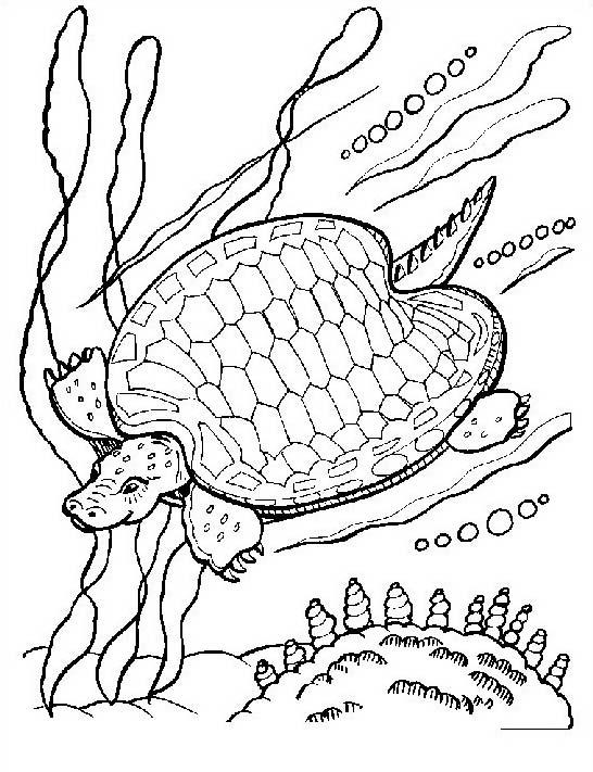 Tartaruga da colorare 21