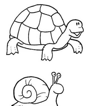 Tartaruga da colorare 23