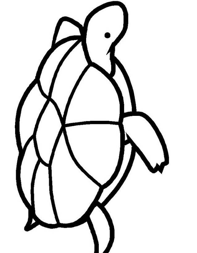Tartaruga da colorare 33