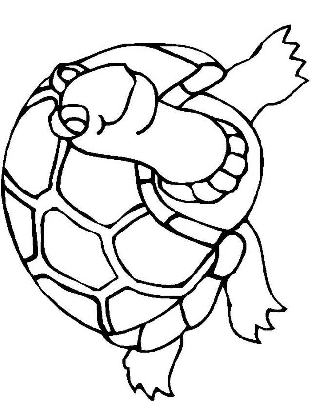 Tartaruga da colorare 34