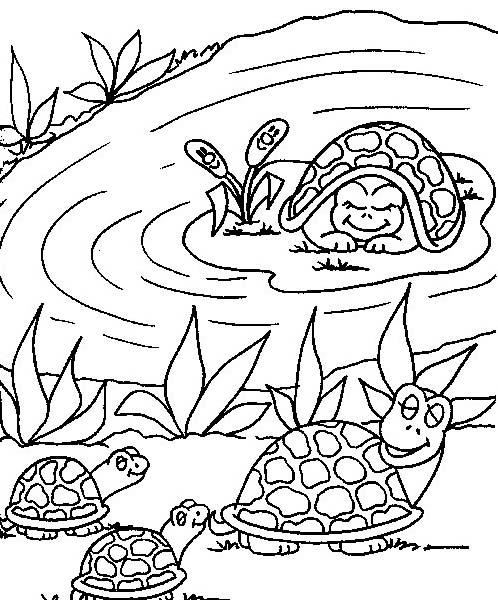 Tartaruga da colorare 47